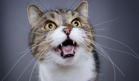 Mauvaise haleine du chat