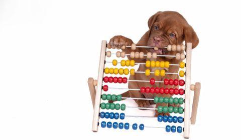 budget pour un chien