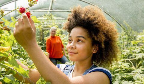 Les potagers scolaires, ou comment faire manger des légumes à vos enfants