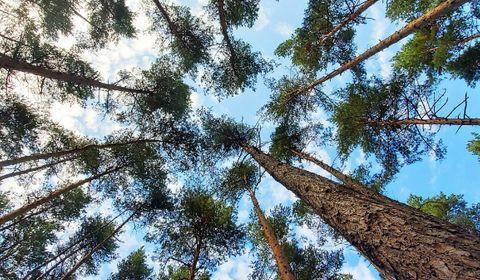 """Le mot """"neutralité"""" ne sous-entend pas une absence totale d'émission de gaz carbonique, mais un équilibre entre les émissions de gaz à effet de serre liées aux activités humaines et l'absorption du carbone par les puits naturels."""