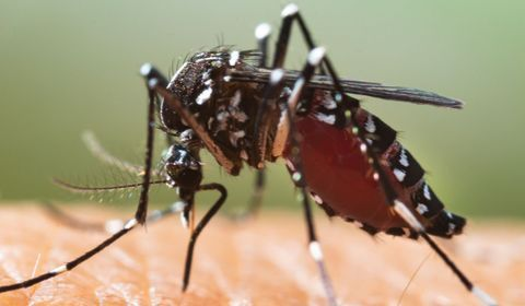 Dengue : la situation en France