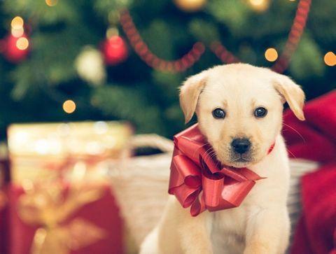 Cadeaux de Noël pour votre animal