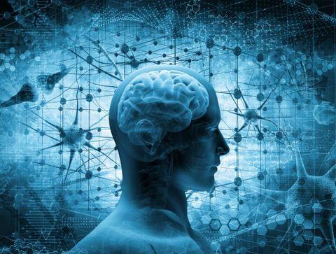 Le fonctionnement du système nerveux