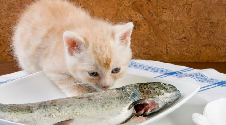 chat mange du poisson