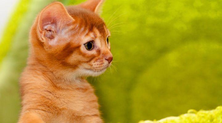 personnalité chaton