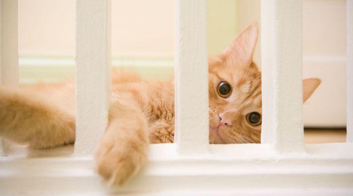 bonnes manières pour un chat