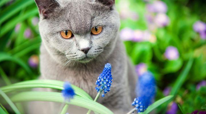 empoisonnement du chat