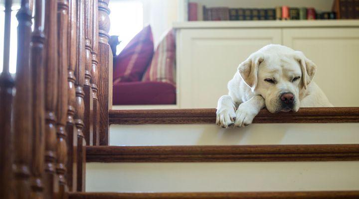 chien reste seul