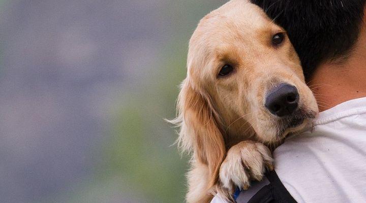 chien perçoit nos émotions