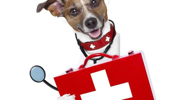 trousse à pharmacie pour mon chien