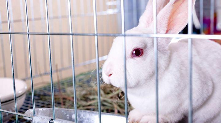nettoyage de l'habitat du lapin