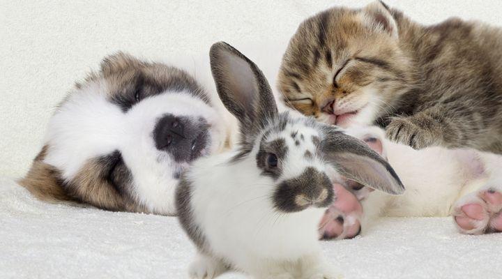 cohabitation avec un lapin