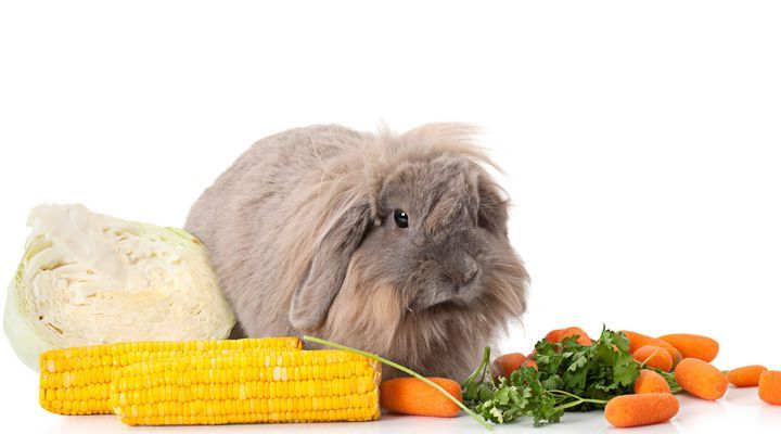 équilibre alimentaire du lapin