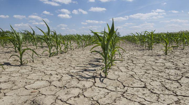 Sécheresse et restriction d'eau : combien de départements sont concernés ?