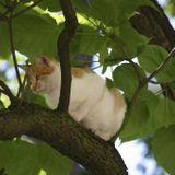 Répulsif pour chat : comment en faire soi-même ?