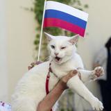 Coupe du monde 2018 : après les pronostics d'un poulpe, c'est au tour d'un chat