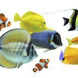 Espèces de poissons