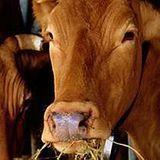 Le problème des farines animales