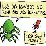 Les piqûres d'insectes