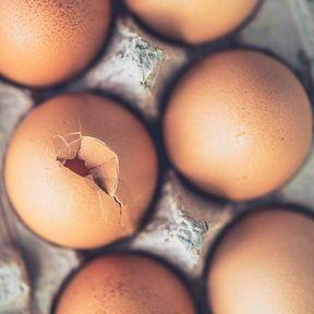 Les œufs bruns sont plus nutritifs que les œufs blancs