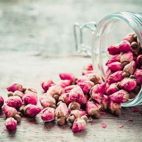 Des macérâts glycérinés de bourgeons de rosier sauvage ou d'orme