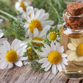 L'hydrolat aromatique de camomille romaine