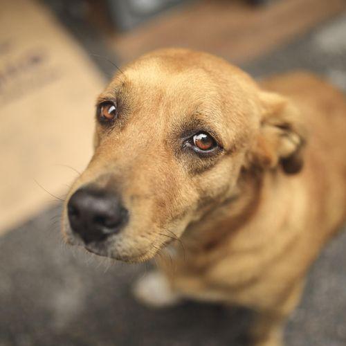 Covid-19 : une dérogation au confinement accordée pour l'adoption d'animaux